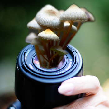 fungus growing lens